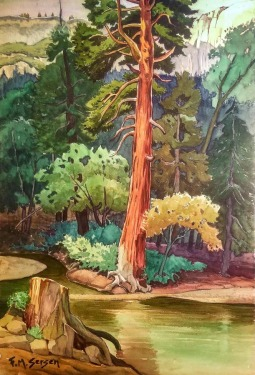 Fred M Sersen Redwood in Landscape 22x15 Watercolor